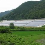 山林で行う太陽光発電について。伐採・造成・地目変更の課題など