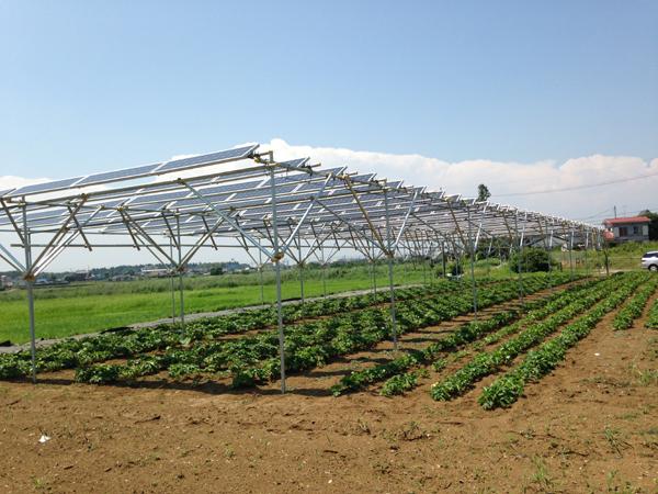 農地で行う太陽光発電。転用型と営農型(ソーラーシェアリング)とは?