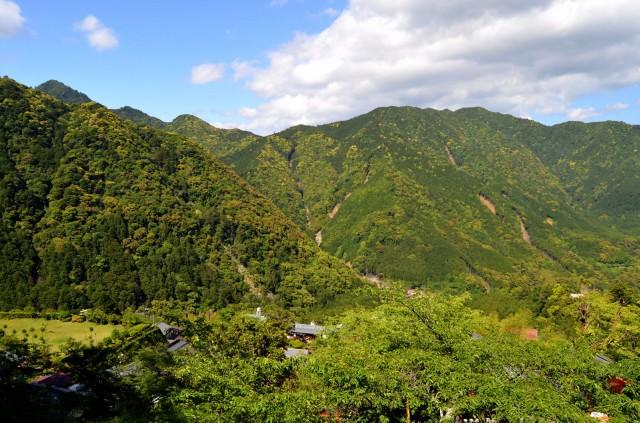 山林活用は資源の立木・自然・土地の3つで考える! 有効な活用方法