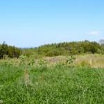 耕作放棄地とは?その面積と問題の原因、再生利用に向けた対策