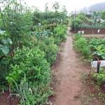 市民農園の開設方法。貸し農園ビジネスに関する3つの制度