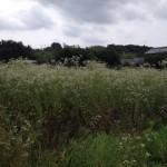 土地管理の方法と頻度の目安