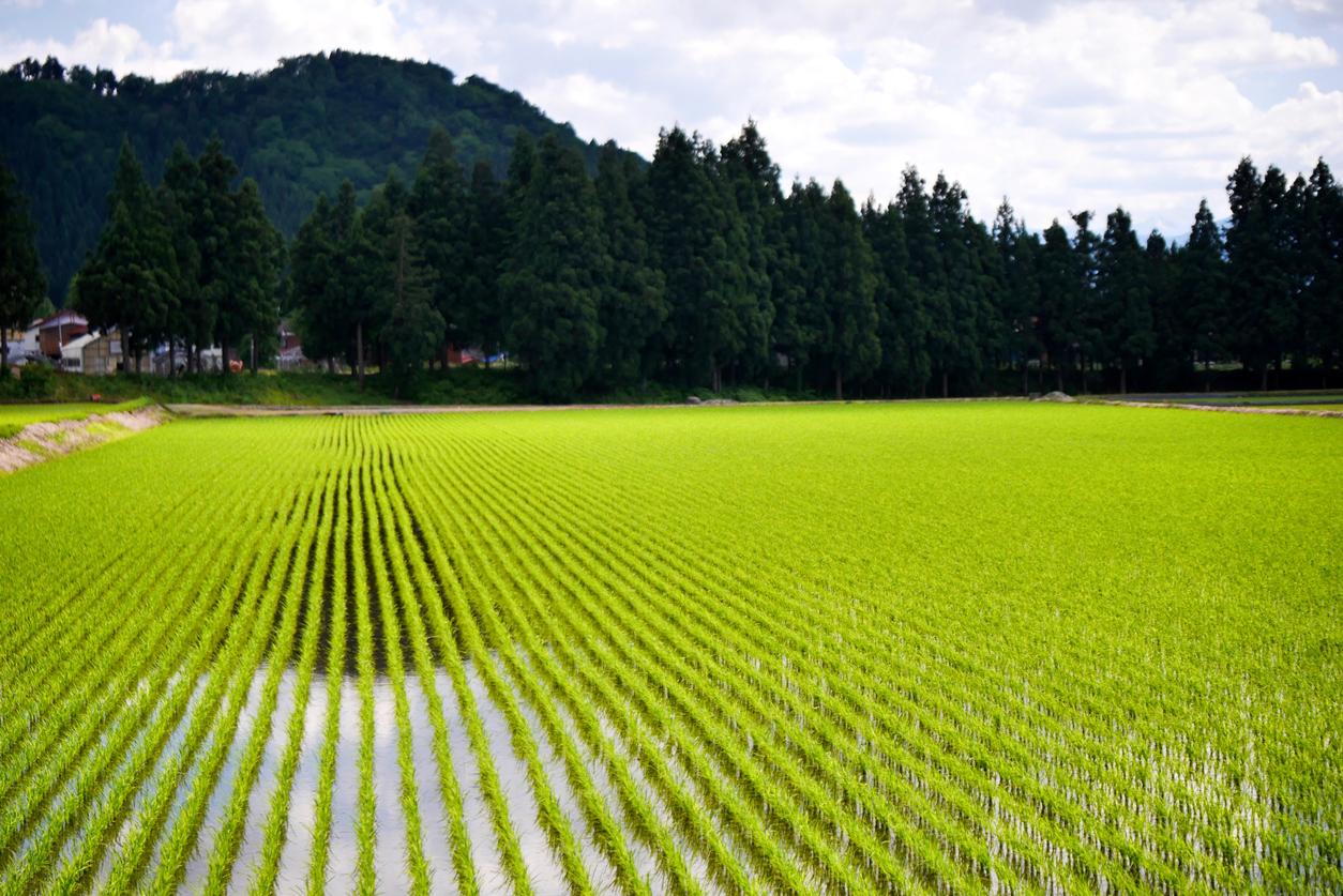 農地を売却する方法と価格相場! 農地の売買には許可が必要?